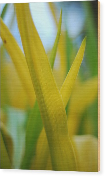 Yellow Green Wood Print by Susette Lacsina