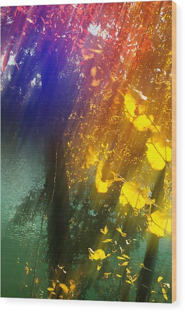 Yellow Leaf Along The Lake Wood Print