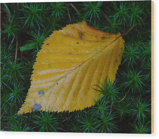 Yellow Leaf Wood Print by Juergen Roth
