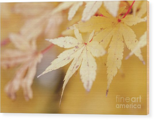 Yellow Leaf With Red Veins Wood Print
