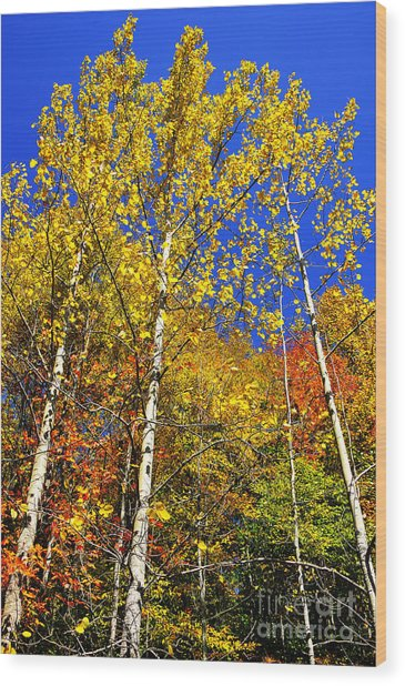 Yellow Leaves Blue Sky Wood Print