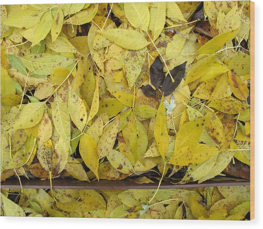 Yellow Leaves On The Ground  Wood Print by Lyle Crump
