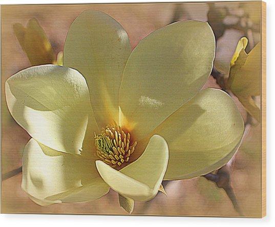 Yellow Magnolia In Full Bloom Wood Print