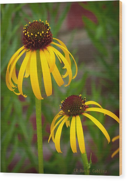 Wood Print featuring the photograph Yellow Pair by David Coblitz