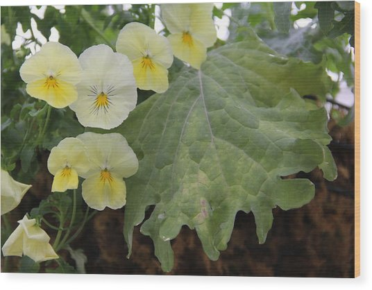 Yellow Pansies Wood Print