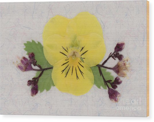 Yellow Pansy And Coral Bells Pressed Flowers Wood Print