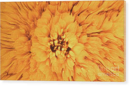 Yellow Flower Under The Microscope Wood Print