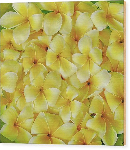 Yellow Plumerias Wood Print
