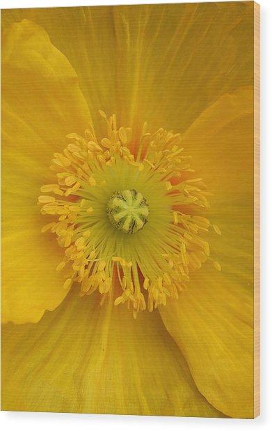 Yellow Poppy Flower Center Wood Print