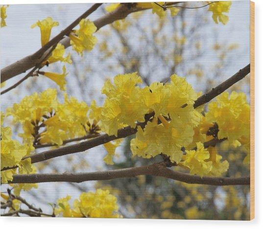 Yellow Poui In Bloom Wood Print by Peter Hanoomansingh