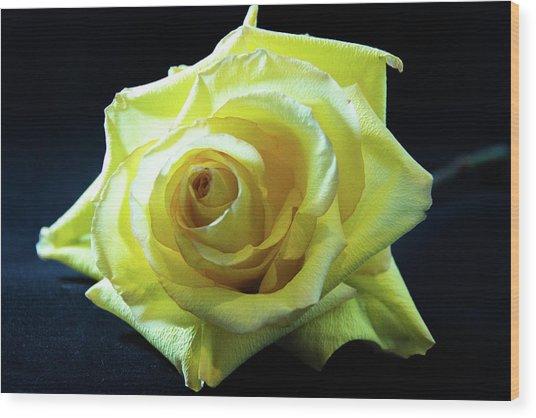 Yellow Rose-7 Wood Print