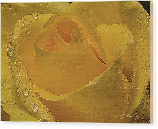 Yellow Rose And Dew Wood Print by Marti Buckely