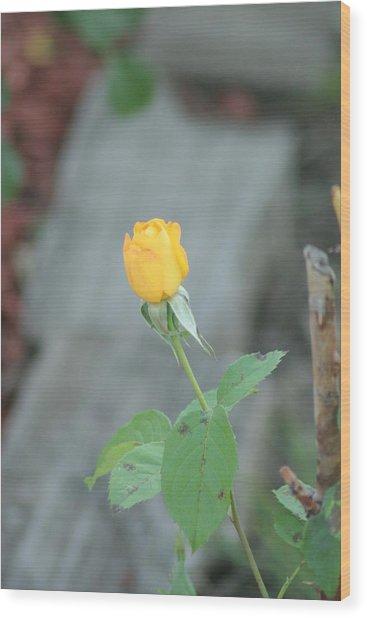 Yellow Rose Bud Wood Print by ShadowWalker RavenEyes Dibler