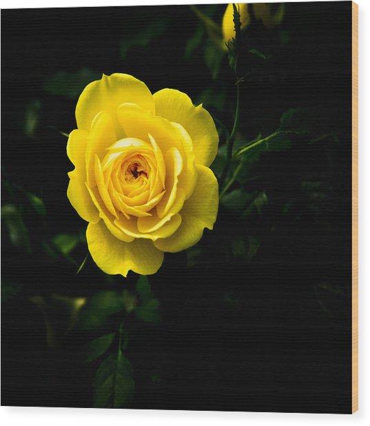 Yellow Rose Wood Print by John Ater