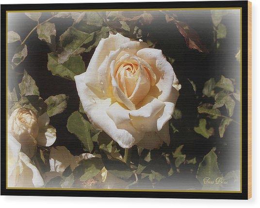 Yellow Rose Of Texas Wood Print by Trina Prenzi
