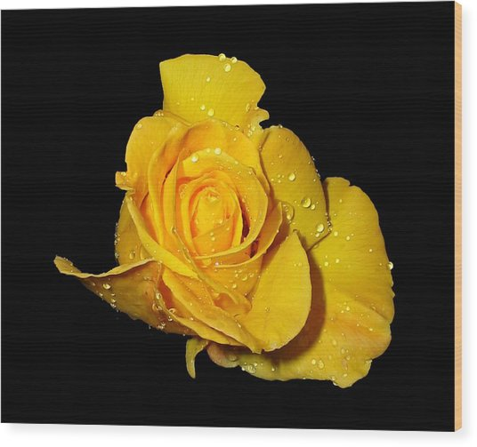 Yellow Rose With Dew Drops Wood Print