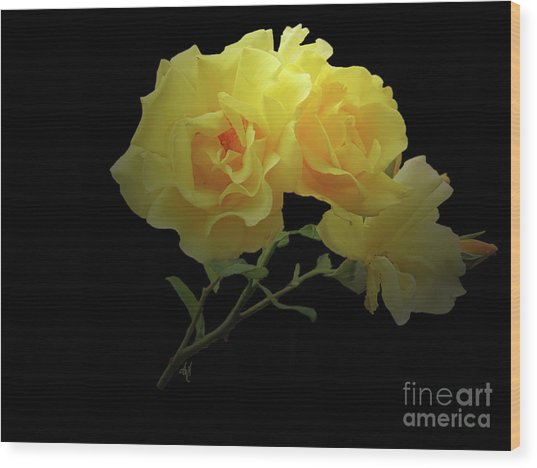 Yellow Roses On Black Wood Print