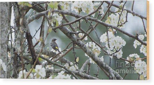 Yellow-rumped Warbler In Pear Tree Wood Print