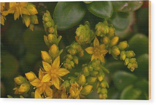 Yellow Sedum Wood Print