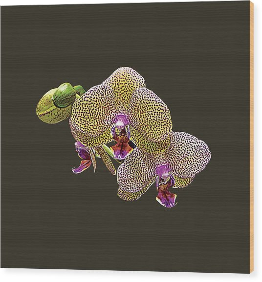 Yellow Spotted Orchid Wood Print by Susan Savad