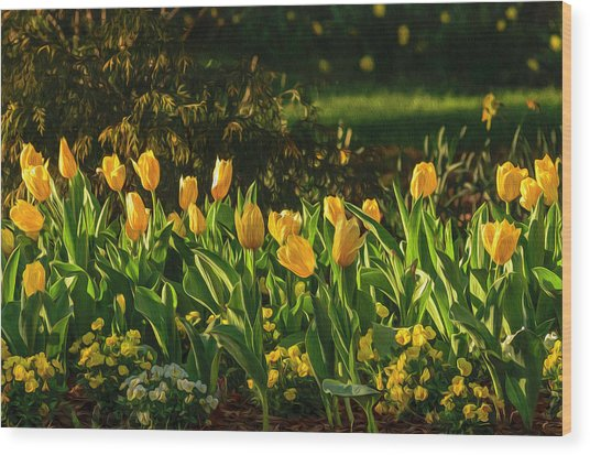 Yellow Spring Fever Wood Print