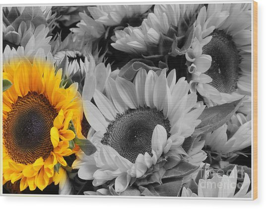 Yellow Sunflower On Black And White Wood Print