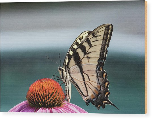 Yellow Swallowtail II Wood Print