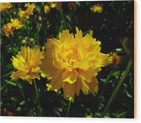 Yellow Symphony Wood Print by Edan Chapman