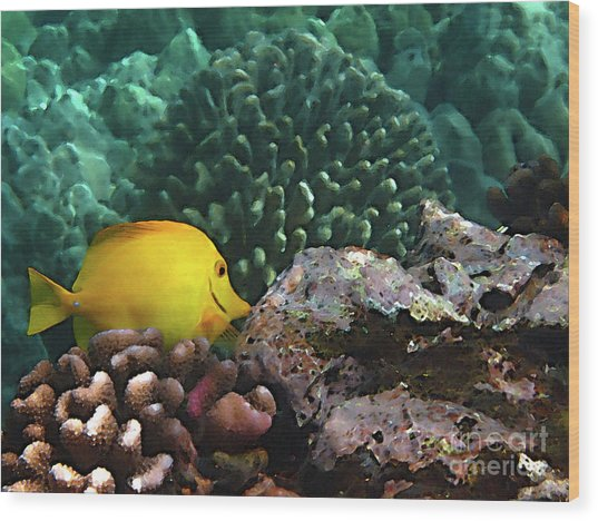 Yellow Tang On The Reef Wood Print