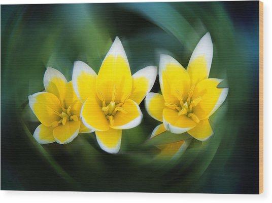 Yellow Trio Wood Print