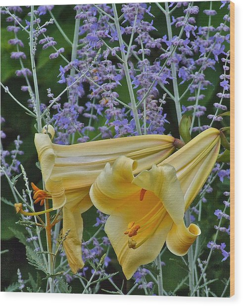 Yellow Trumpets Wood Print