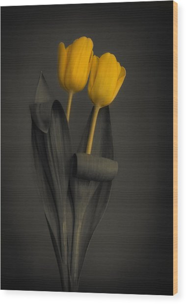 Yellow Tulips On A Grey Background Wood Print