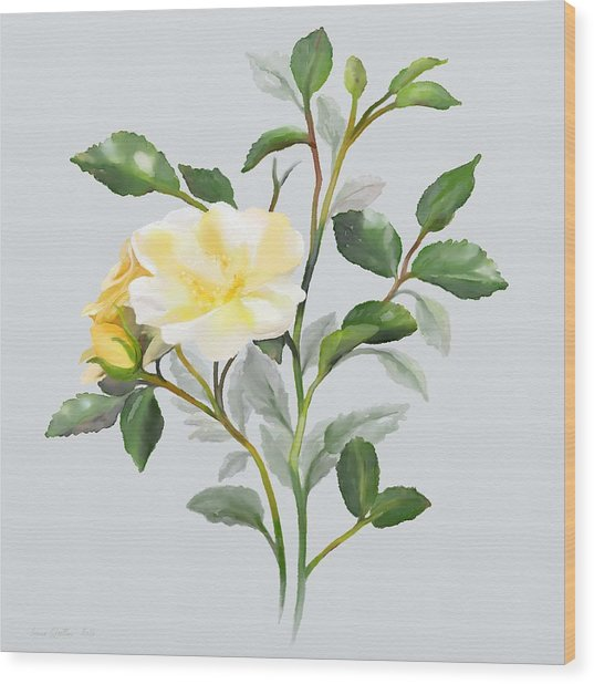Yellow Watercolor Rose Wood Print