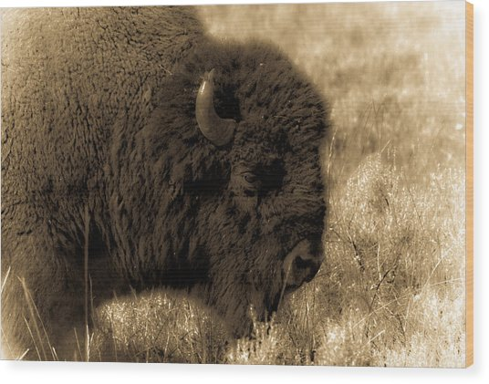 Yellowstone Bison Wood Print by Patrick  Flynn