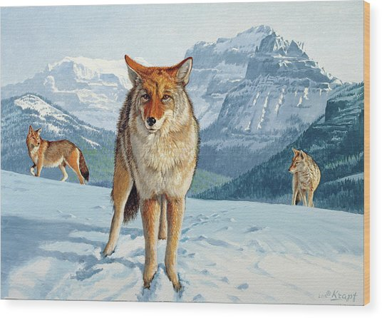 Yellowstone Coyotes Wood Print
