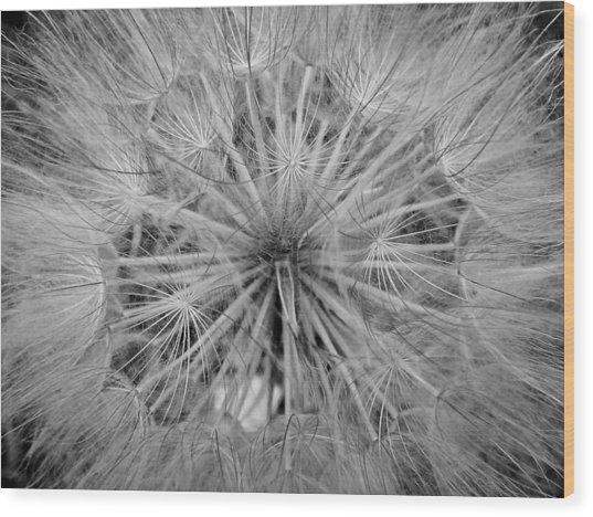Yellowstone Dandelion Wood Print by Jonathan Hansen