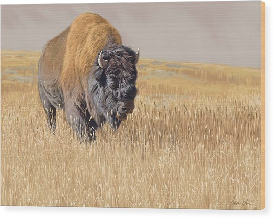 Yellowstone King Wood Print