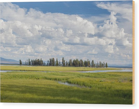 Yellowstone Meadow Wood Print