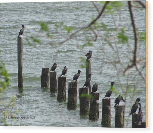 York River Cormorants Wood Print