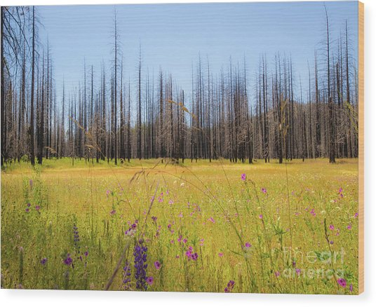 Yosemite Juxtaposition By Michael Tidwell Wood Print