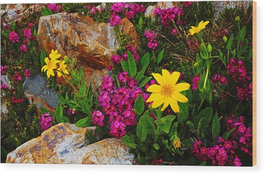 Yosemite Wildflowers Wood Print