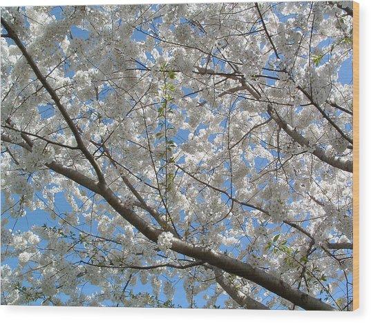 Yoshino Cherry Blossoms Wood Print