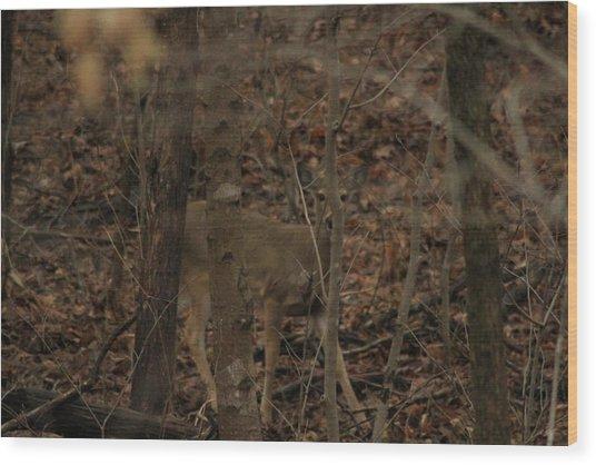 I See You  Wood Print by Charles Cook