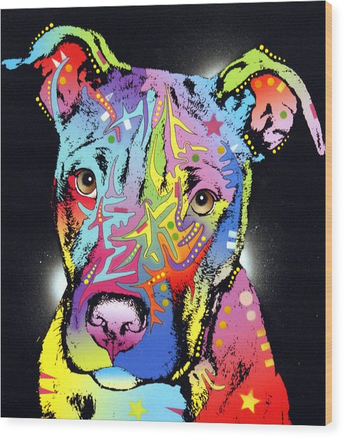Young Bull Pitbull Wood Print