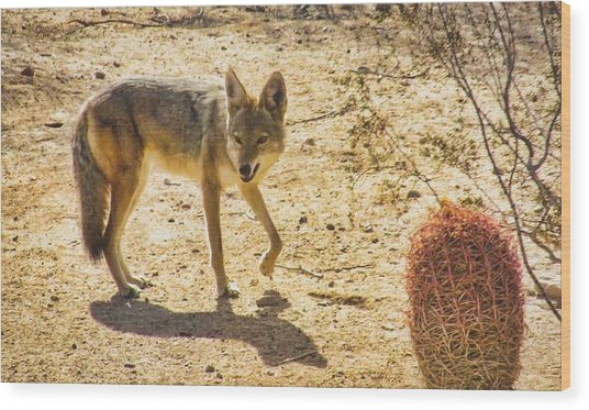 Young Coyote And Cactus Wood Print
