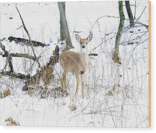 Young Doe And Spring Snow Wood Print