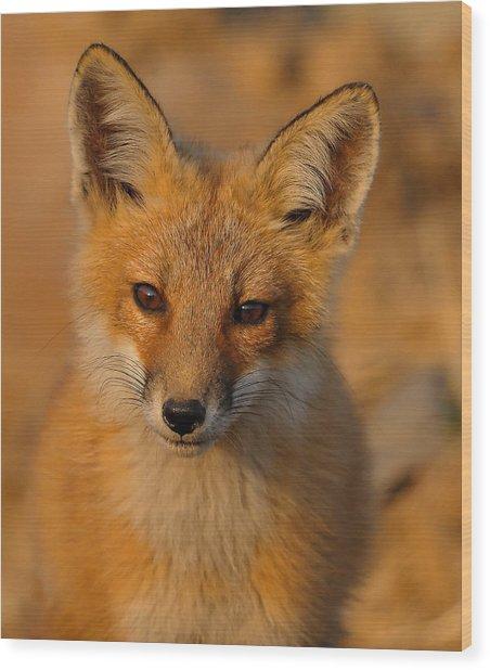 Young Fox Wood Print