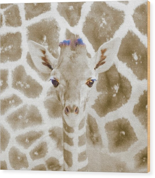 Young Giraffe Wood Print