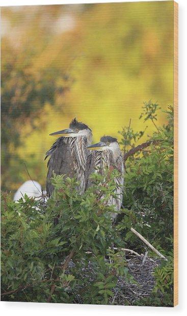 Young Herons Wood Print
