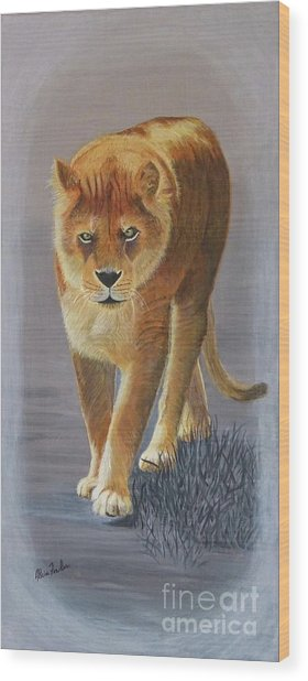 Young Male Lion Wood Print